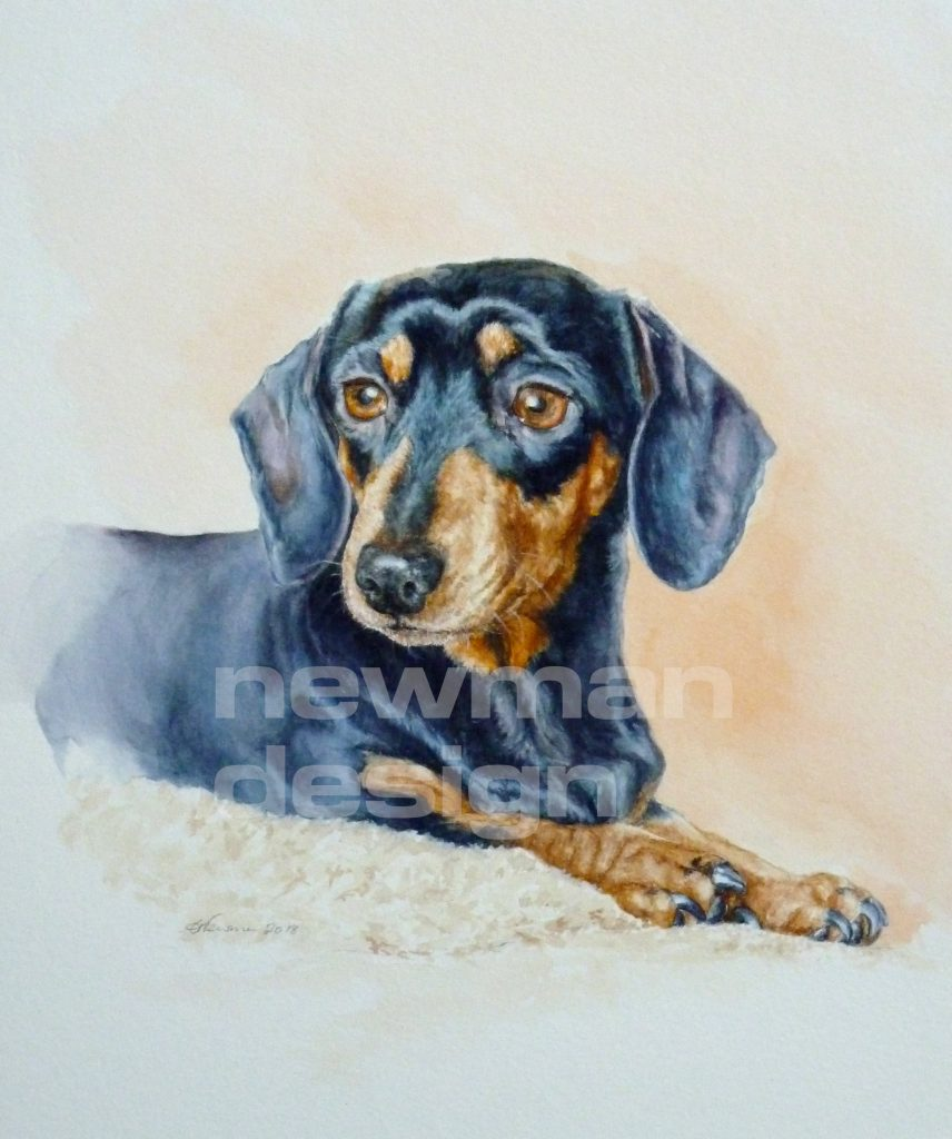 Dotty Dachshund watercolour