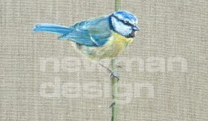 Blue Tit – oil painting