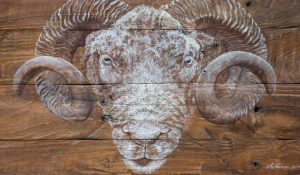 """Ramshackle"" Dorset Ram on Pallet Wood"