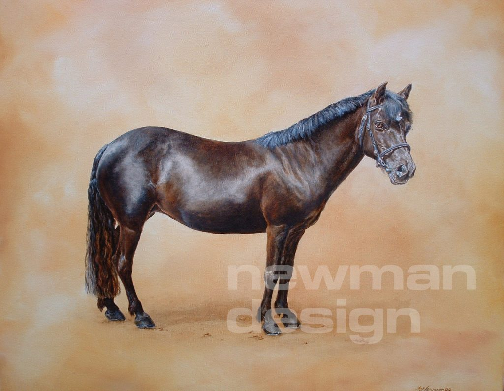 Phoebe horse and equine portraits