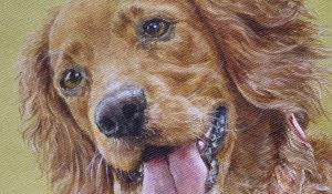 Cocker Spaniel – oil painting